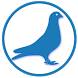 Obrączki gołębi