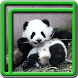 Cute Panda Live Wallpapers by Blue Live Wallpapers