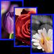 Flowers HD Live Wallpaper by JMint