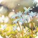Blue Hyacinth Live Wallpaper by DynamicArt Creator