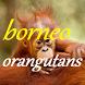 ORANGUTANS BORNEO by Bahari