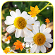 Autumn Flowers Live Wallpaper by Gods Gift