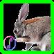 Rabbit sounds