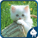 Cats Jigsaw Puzzles by Titan Inc