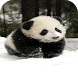 Panda Wallpaper HD by Android Wallpaper Developers