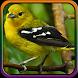 Suara Burung Sirtu Terbaik by Pram App