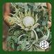 Wedding Bouquet Ideas by ZulfInc