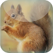 Red Squirrel Live Wallpaper