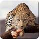 Wild Animal Live Wallpaper PRO by Live wallpaper HD