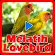 Melatih Lovebird by DanMedia