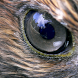 Animal Eyes 1 FREE by Appa Apps