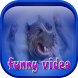 Funny Video Clips by Olive Sudio