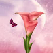 Calla Wallpapers by fryttyteam
