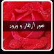 صور ازهار وورود by Y.S.W