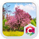 Best Cherry Blossom Theme by Baj Launcher Team