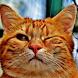Funny cat videos by aplicacionesentretenidas