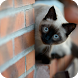 Siamese Pack 2 Wallaper by WallpapersCompany
