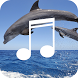 Dolphin Sound-Relax Sleep Calm by Fitness Sounds