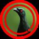 Suara Burung Cucak Keling by Omasuhu