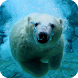 Polar Bear Live Wallpaper by Empire Wallpapers