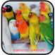 Mp3 Masteran Lovebird by Goodapps Project