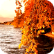 Autumn 3D Video LWP by ComfyDj