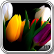 Tulip Pack 2 Wallpaper by LegendaryApps