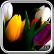 Tulip Pack 2 Wallpaper by LegendaryApps