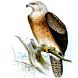 Magnificent Birds Of Prey by Douglas Richburg