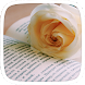 Yellow Rose Theme by Heartful Theme