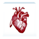 Israel Heart Society by AppsWith.us Limited