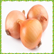 New Onion Onet Connect Game by Android Fresh