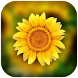 3D Photo Gallery-Photo Manager-Photo Video Gallery by Sunstar App Studio