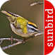 Vogel Id Schweiz - Gartenvögel by Sunbird Images