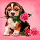 Puppy Rose Live Wallpaper by Daksh Apps