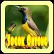 Suara Burung Sogok Ontong by rezpectordev