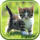 Cat Live Wallpaper by Live Wallpapers 3D