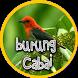 Master Kicau Burung Cabai by amily corp