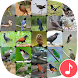 Appp.io - Thai Bird Sounds by Appp.io