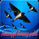 Pemanggil Burung Walet 2017 by Tahu Bulat App