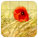 Tile Puzzles · Fields by Thomas Fuchs-Martin