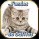 Fondos de Gatitos by DiegoApps