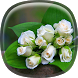 White Rose Live Wallpaper HD by Phoenix Live Wallpapers