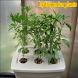 hydroponics plants by imagesdev