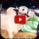 Qurbani Cow - Funny Videos by Ilyasahmed