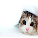 cat wallpapers by bluewater dev
