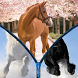 Horses World - Zipper Unlock Screen by iKhanGames