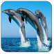 Dolphin Live Wallpaper by Best Live Wallpapers Free