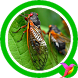Cicada Sounds by Free Sounds Effects