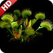 Venus Flytrap Wallpaper by UniverseWallpapers